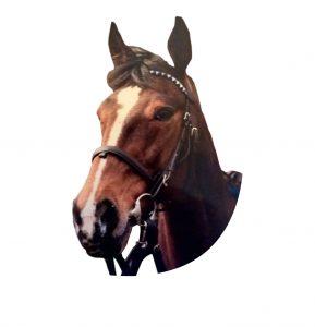 PaardenInzicht eigen paarden