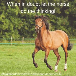 Twijfel je of paardencoaching iets voor jou is?