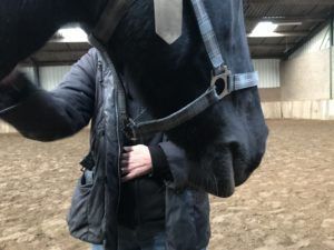 www.paardeninzicht.nl management training en coaching met paarden