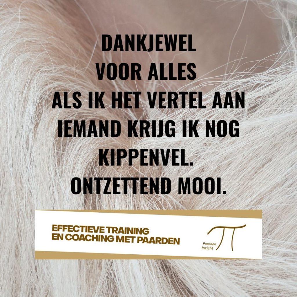 Werken aan: communicatie, samenwerking of leiderschap? Bel PaardenInzicht 0622360999 of mail info@paardeninzicht.nl