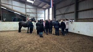 Power Aanspreken! www.paardeninzicht.nl